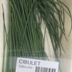 Cibulet